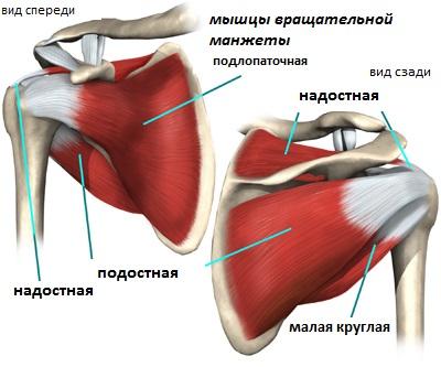 Пластика плечевого сустава по хитрову таблетки и мази при болях в суставах