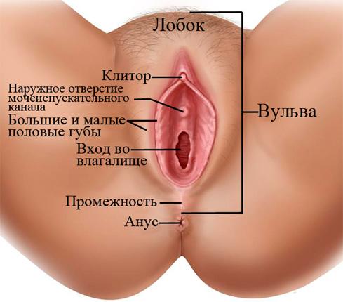 Фото влагалища и большие половые губы, бабы ебутся и сосут хуй в картинках