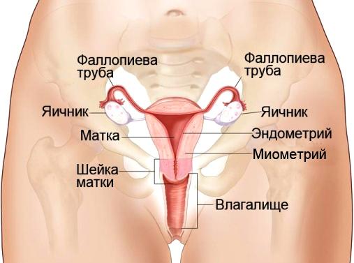 biologicheskaya-foto-vagini