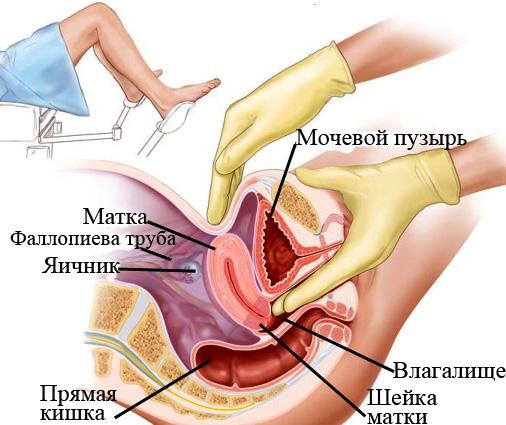 Народный рецепт как увеличить половой член