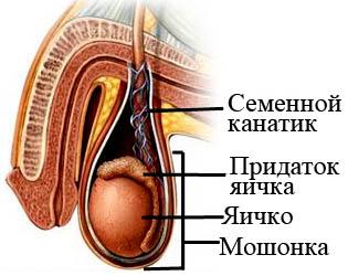 После мастурбации воспаление семенного канатика