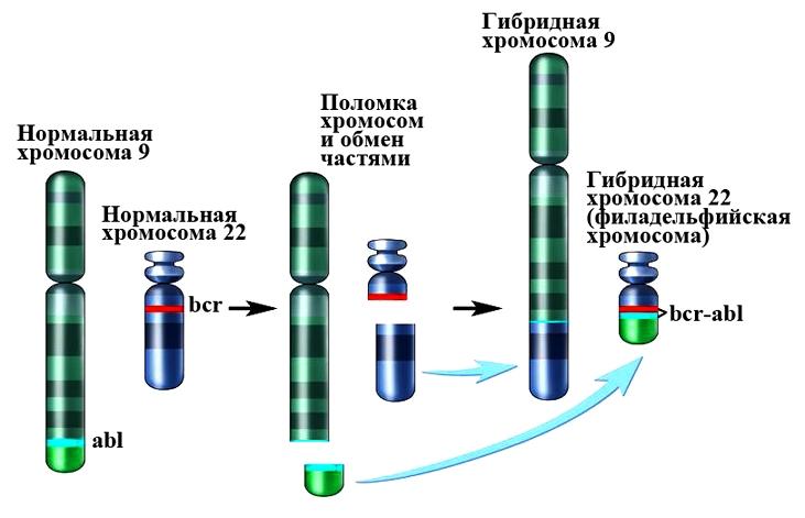 Филадельфийская хромосома