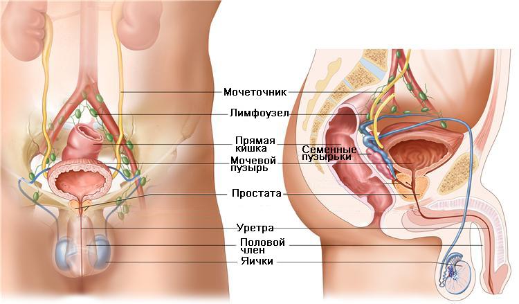 Оргазм от предстательной железы