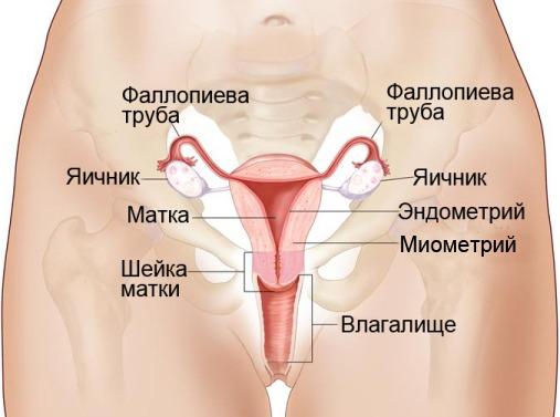 репродуктивной системы